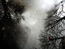 树的风景反射在路面的 免版税库存图片