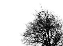 树的黑白图片在清楚的天空的 死亡,哀悼和悲伤概念的用途 库存照片