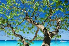 树的阴影与美丽的天空的 免版税库存照片
