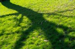 树的阴影在春天草的 免版税库存图片