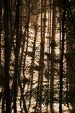 从树的阴影 库存图片