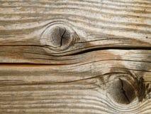 树的结构 库存照片