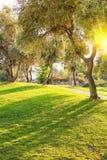 草坪在晚上光之下的城市公园 库存图片