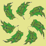 树的绿色叶子 免版税库存图片