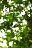 从树的绿色和白色背景 免版税库存图片