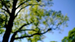 从树的Bokeh在晴天 股票视频