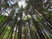 树的mighteness 库存图片