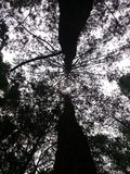 树的Siluet 免版税图库摄影