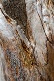 树皮关闭,纹理和形状 库存照片