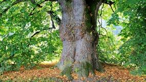 树皮和秋天叶子 免版税库存照片