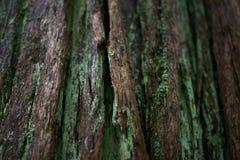 树皮和青苔纹理 图库摄影