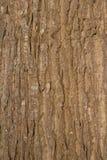 树皮垂直的看法在阳光下 库存图片