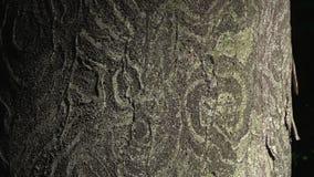 树皮异常的装饰纹理  股票视频