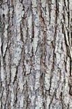 树皮是干燥的 免版税库存照片