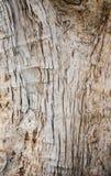 树皮木纹理和背景 图库摄影