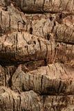 树皮热带棕榈树的抽象棕色自然纹理 免版税库存照片