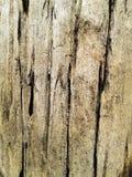 树皮特写镜头能用作为纹理或背景 木头 browne 免版税库存照片