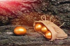 树皮用在粗麻布的传统复活节金黄鸡蛋 库存照片