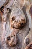 树皮的形状 免版税库存照片