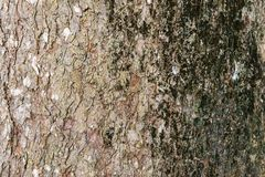 树皮皮肤外部背景树干有机被风化的难看的东西果皮土气详细 免版税库存照片
