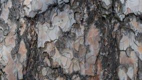 树皮纹理和背景 免版税库存图片