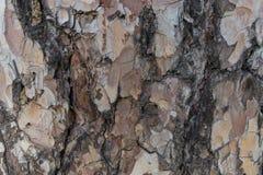 树皮纹理和背景 库存照片