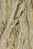 树皮纹理 图库摄影