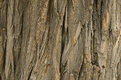 树皮纹理 库存照片