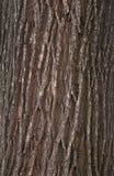 树皮纹理 免版税图库摄影