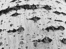 树皮美好的纹理与青苔和模子的 库存图片