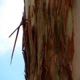 树皮肤特写镜头 布朗吠声 库存图片