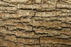 树皮背景。 免版税库存照片