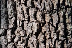 树皮背景 免版税库存照片
