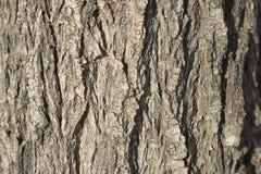 树皮背景 图库摄影