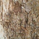 树皮背景 库存图片
