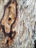 树皮表面 免版税库存照片