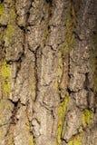 树皮,特写镜头 免版税图库摄影