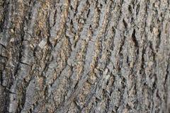 树皮,白杨树 库存图片