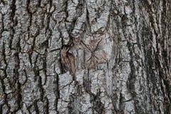 树皮黑暗的纹理  免版税库存图片