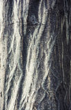 树皮细节视图  免版税库存图片