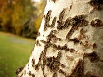 树皮 图库摄影