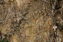 树皮 库存图片