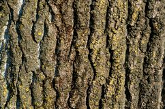 树皮 免版税库存图片