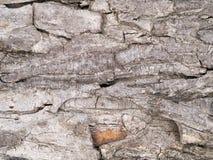 树皮 免版税库存照片