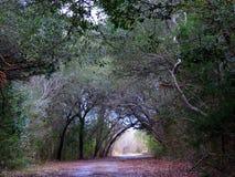 树盖了土乡下公路 免版税库存照片