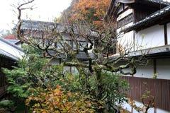 树盖子分支由地衣青苔的在木大厦旁边的秋天在Sanzenin寺庙 免版税图库摄影