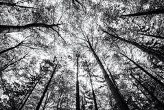 树看法在春天森林里加冠,无色 免版税库存照片
