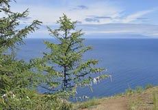 树看法在蓝色贝加尔湖背景的  免版税库存照片