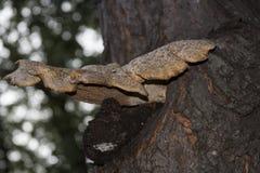 树真菌 库存照片