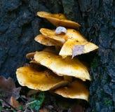 树真菌 免版税图库摄影